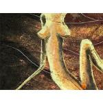 Интерьерные модульные картины ART.: KIM0054