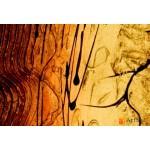 Интерьерные модульные картины ART.: KIM0520